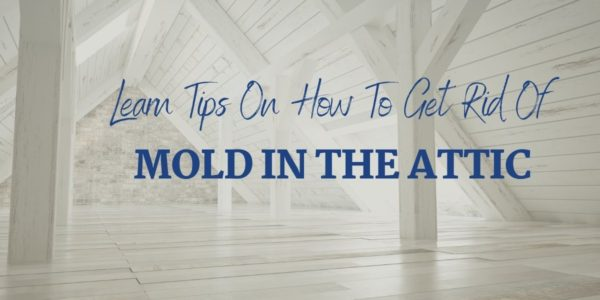 Learn Tips On How to Get Rid Of Mold in The Attic (1)